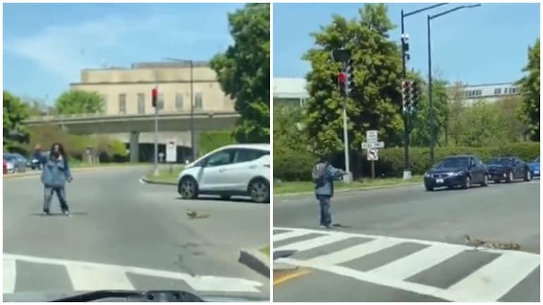 वायरल वीडियो में आदमी बत्तखों और उनकी मां को व्यस्त सड़क पार करने में मदद करता है।  (तस्वीरें: ट्विटर)